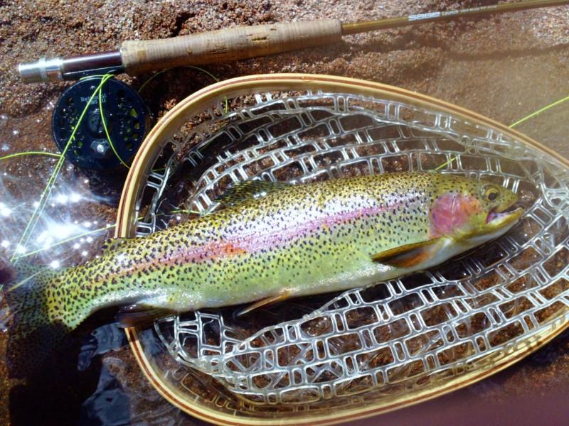 big fish at deckers