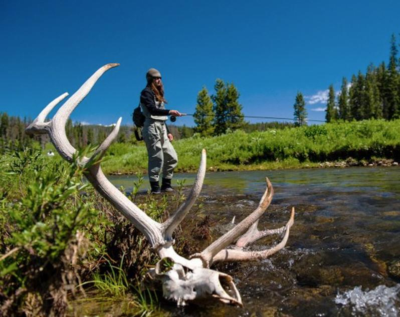 Fly fishing in a stream where a large set of antlers are lying